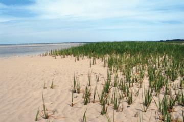 A Solar Still in the Sand