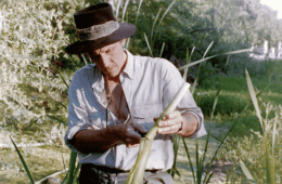 Cattails: King of the Waterways