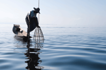 Native Fishing: How to Build a Primitive Fish Basket Trap
