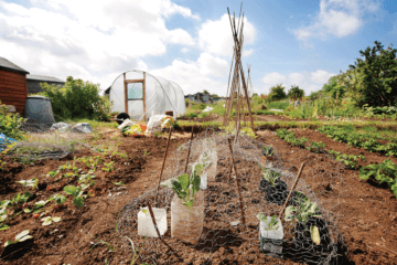 Planting Self-Sufficiency: Best Tips for Starting your Own Garden