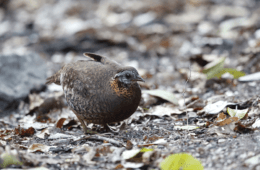The Box Trap: An Ancient, Simple Method for Capturing Birds