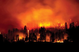 Scorched Earth: Surviving Nature's Wildfires