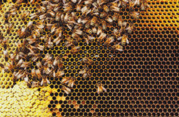 Killer Bees: How to Survive a Swarm Attack