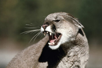 Call of the Wild: How to Avoid Feral Animal Encounters