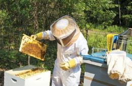How Sweet It Is: The Benefits of Beekeeping
