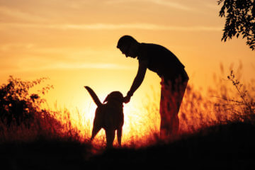 Man's Best Friends: Finding the Perfect Canine Companion