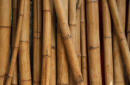 The Swiss-Army Shoot: 5 Survival Uses for Bamboo