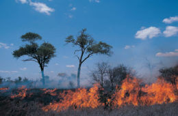 Under Fire: Protect Your Home Against Wildfires