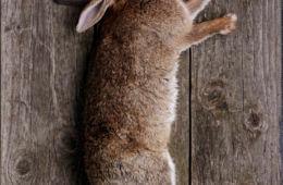 Honorable Kill: Slingshot Hunting Etiquette
