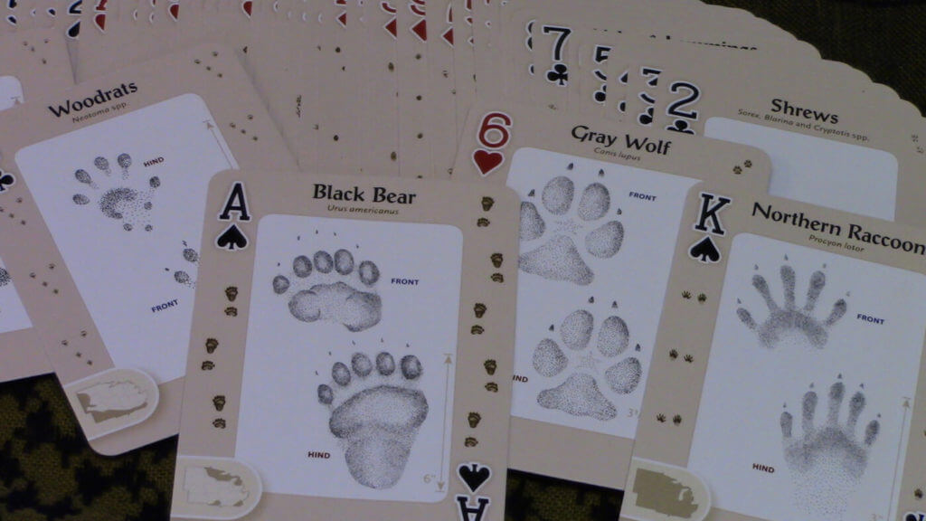 Caption: Playing poker, bridge, rummy or even Go Fish with cards featuring animal prints, knots or medicinal plants allows players to learn survival tips while playing.