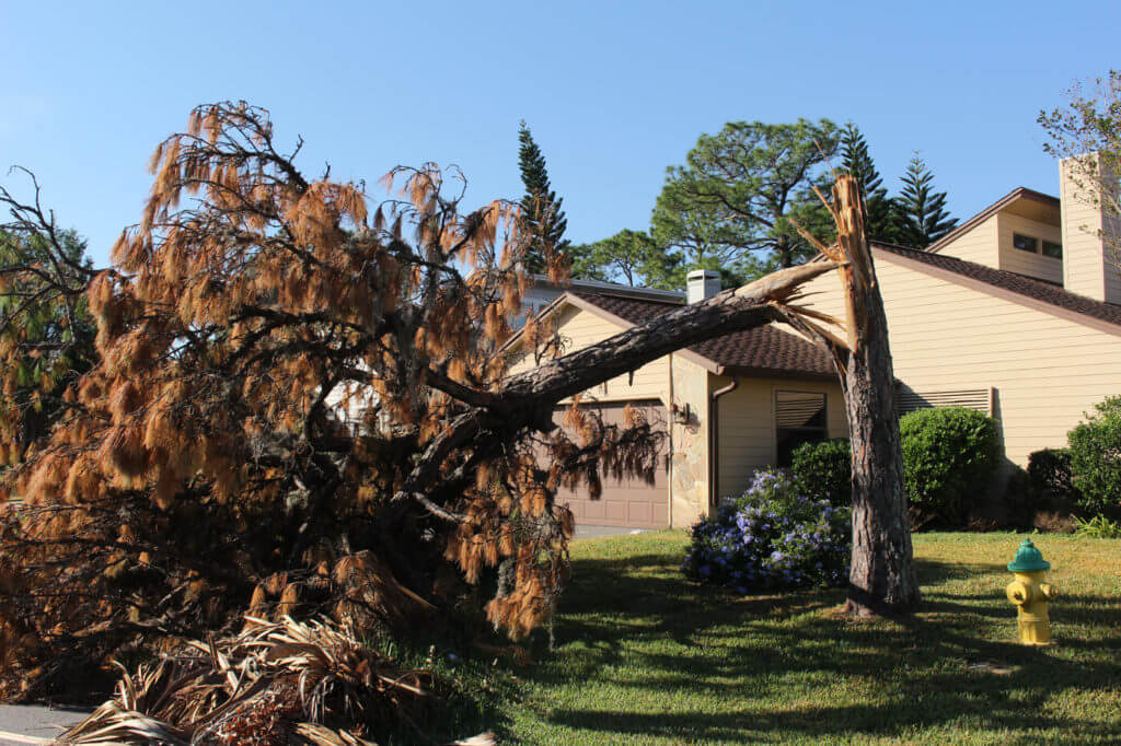 Even though Matthew's gusts were less than 100 mph, they still broke trees in half like matchsticks.