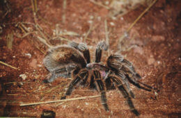 Spider Sense: Identifying the 5 Deadliest Spiders in the U.S.A.