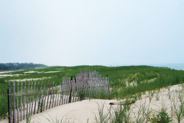 Sand and Salad: Wild Foods Found at the Beach