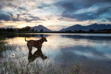 K9 Survival: Top Survival Canines and How to Choose the Best Dog for the Day After