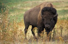 Fight or Flight: Backcountry Survival Strategies Against Deadly Animal Charges