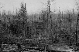 Fire Hazard: Michigan Vulnerable to Wildfires