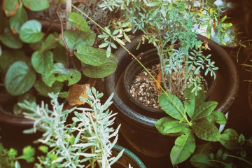 Not Going Dry: The Drought-Resistant Garden