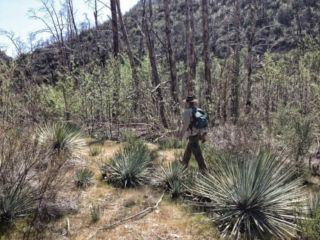 Man walking along path with Yucca plants