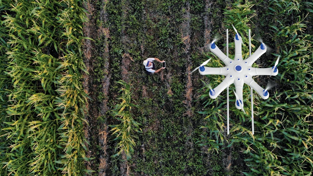 A farmer is spraying his crops using a drone to guide him.