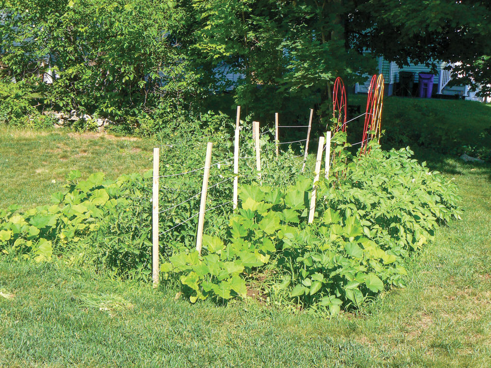 Growing your own food and working in the garden will help you stay healthy.
