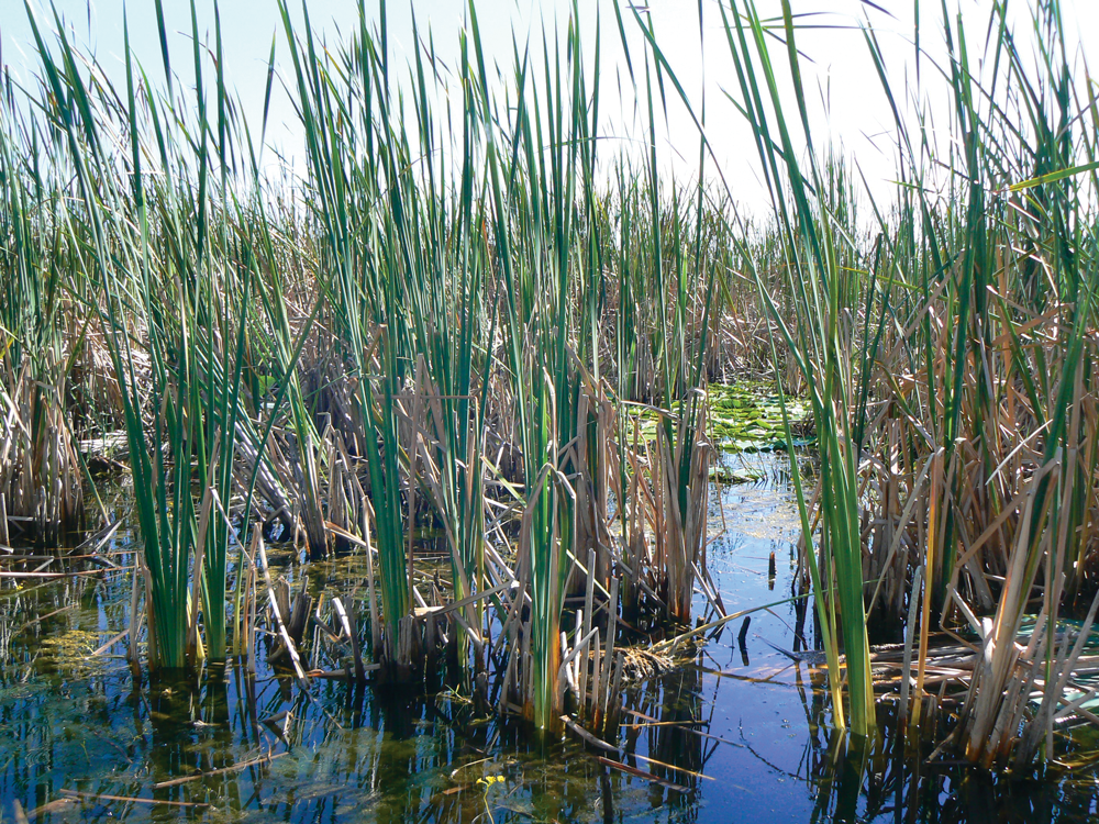 Unlike the arid Arizona landscape, this area in Florida gives you water, food and materials for survival.