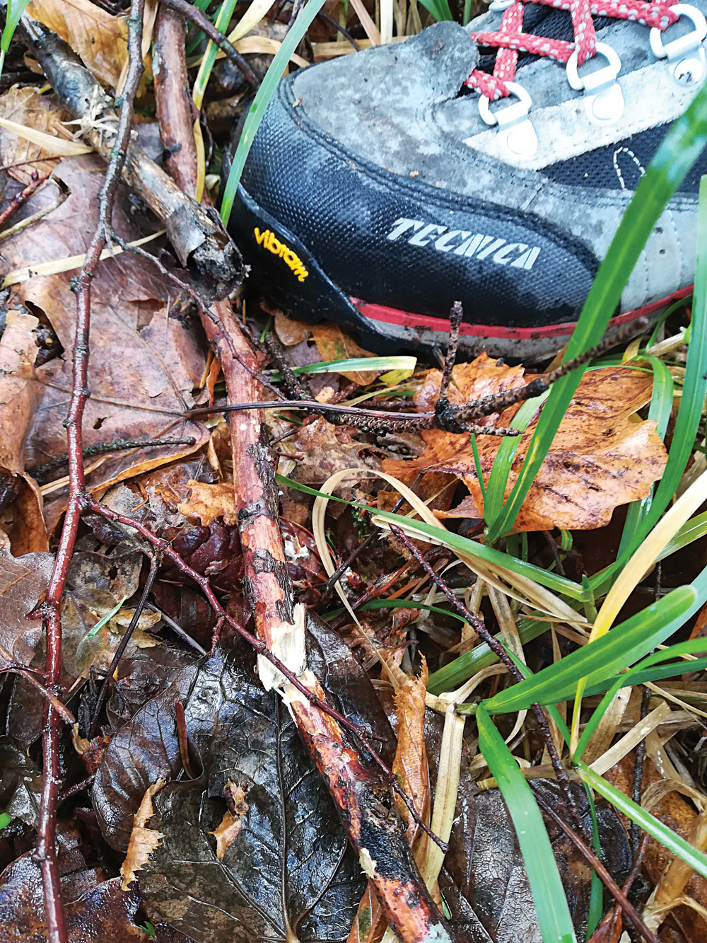 Stepping on wet and rotten twigs could cause one or more breaks.