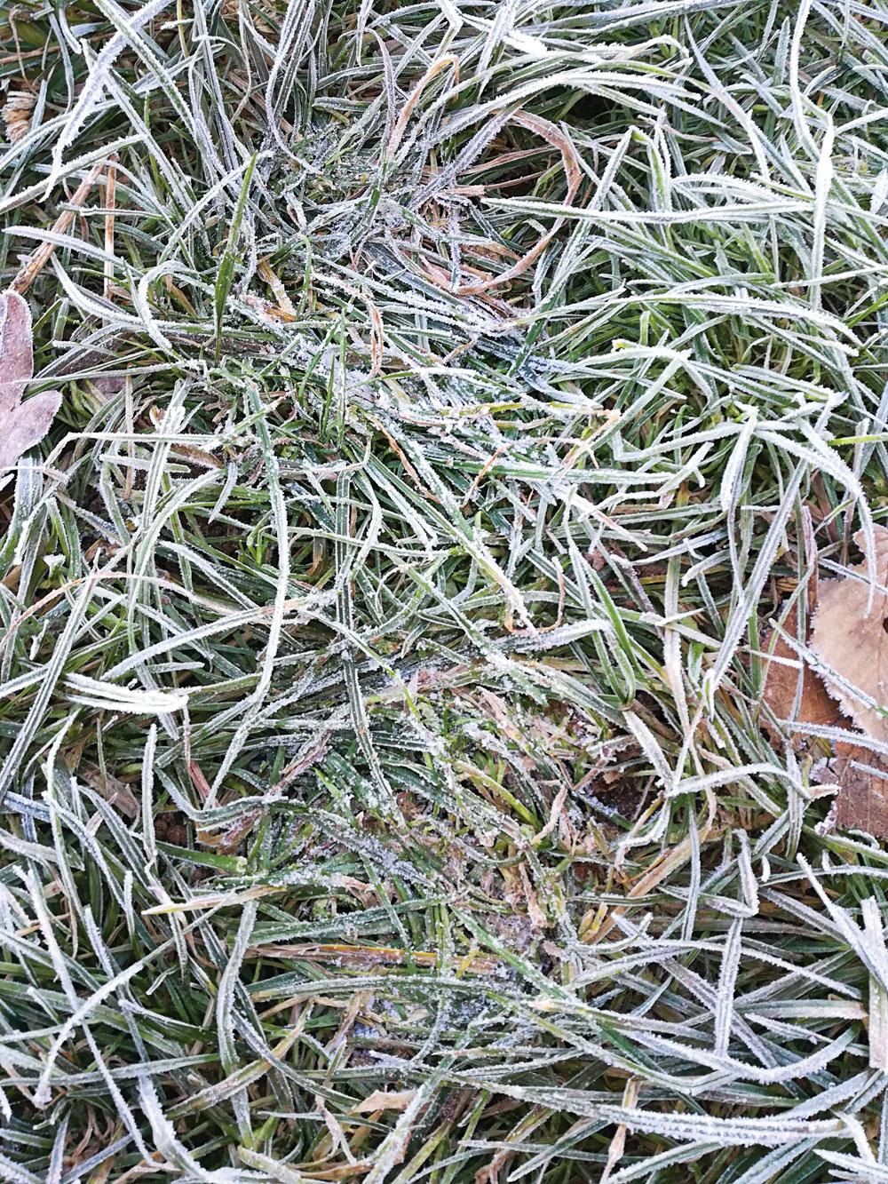 A fresh track left on frozen grassland runs vertically in this photo.