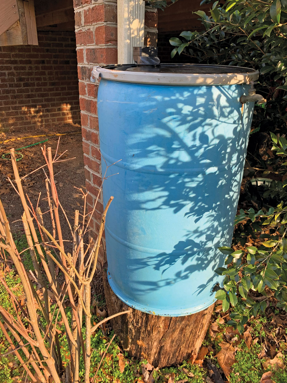A water barrel is in place under a downspout