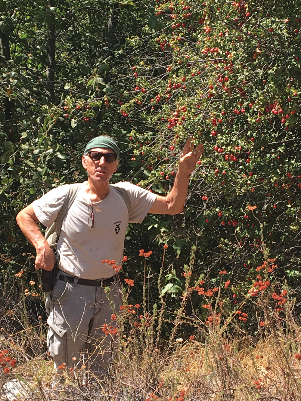 Author Christopher Nyerges explains the benefits of wild cherries while standing next to an evergreen cherry tree that has ripening fruit. (Photo: Jackie Kuang)