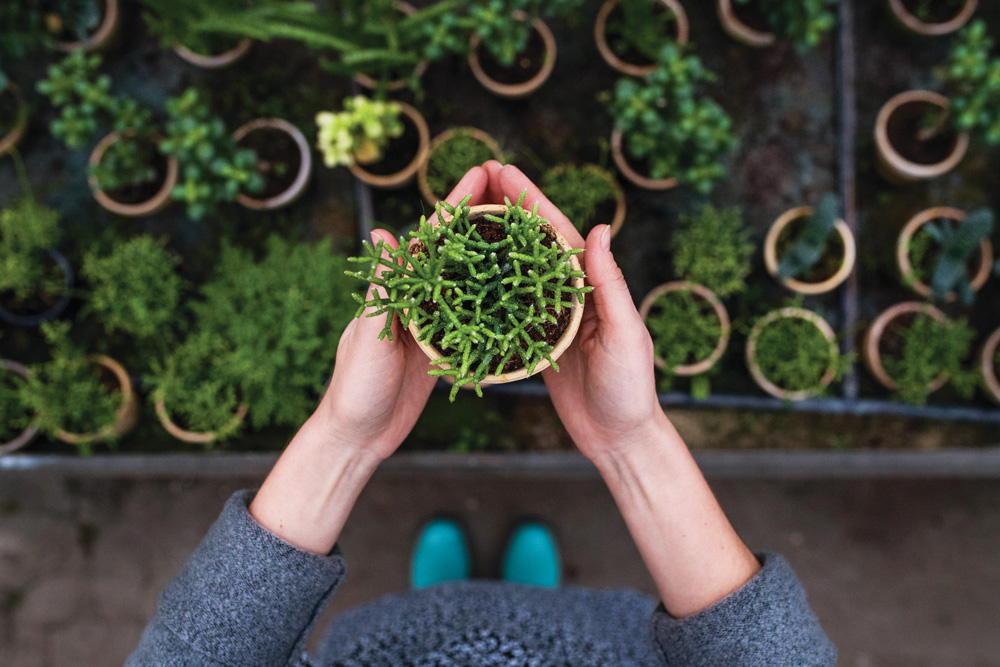 Many people earn extra cash in the spring and summer by selling seedlings and other plants.