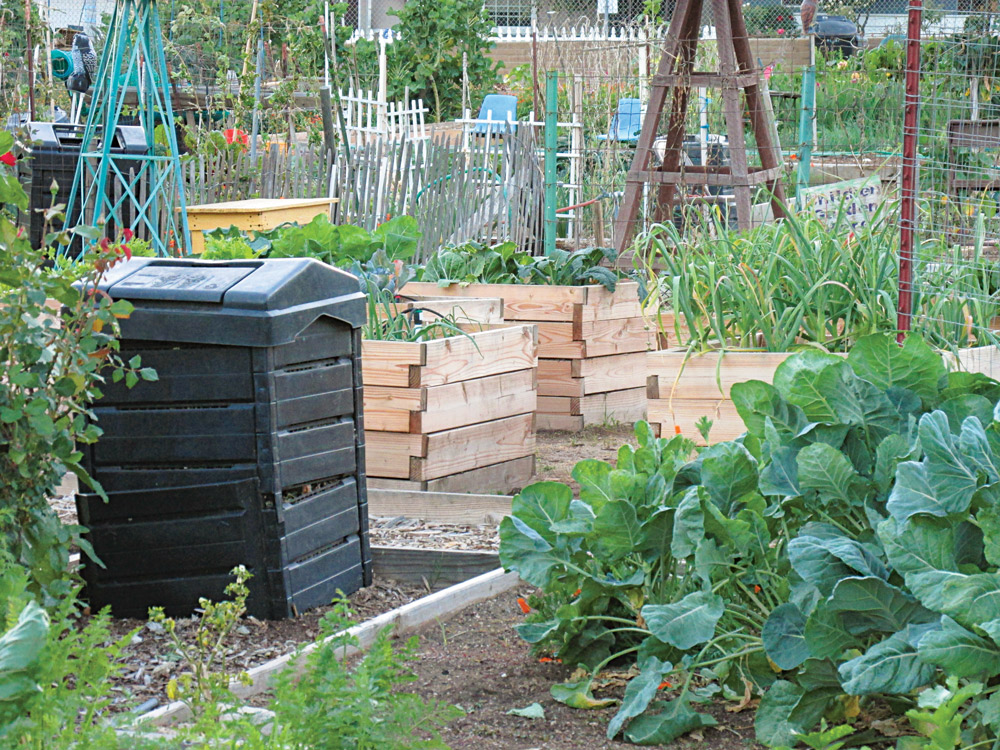 A backyard garden is another great asset to create as part of your backyard survival camp.